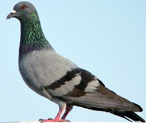 птицы на урале фото с названиями